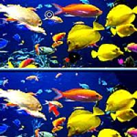 Fish Difference